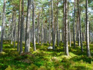Wald Ruhe Gelassenheit Achtsamkeit