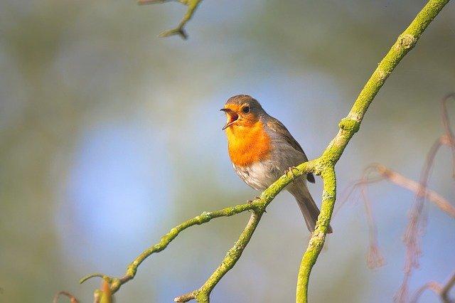 Vogelgesang